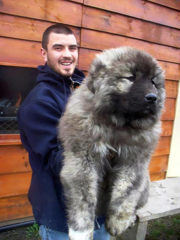 bear-dogs-6
