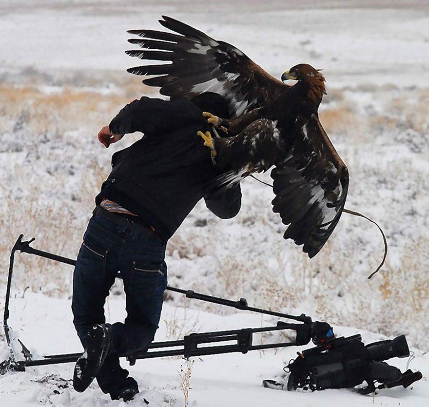 eagle-attacking-cameraman