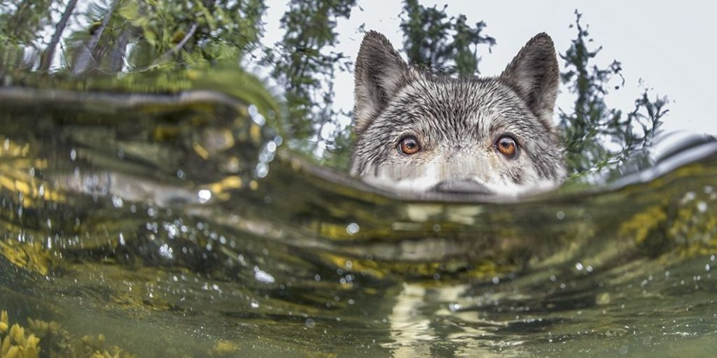 sea-wolves-catch-of-the-day