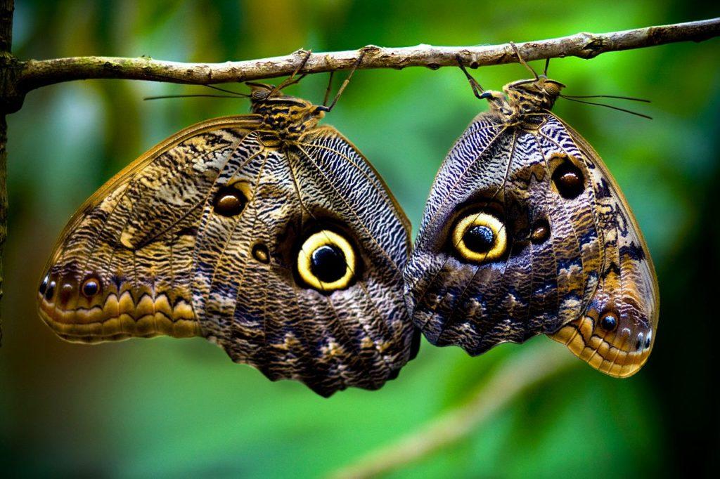 Butterflies-Costa-Rica-beautiful-exemplary