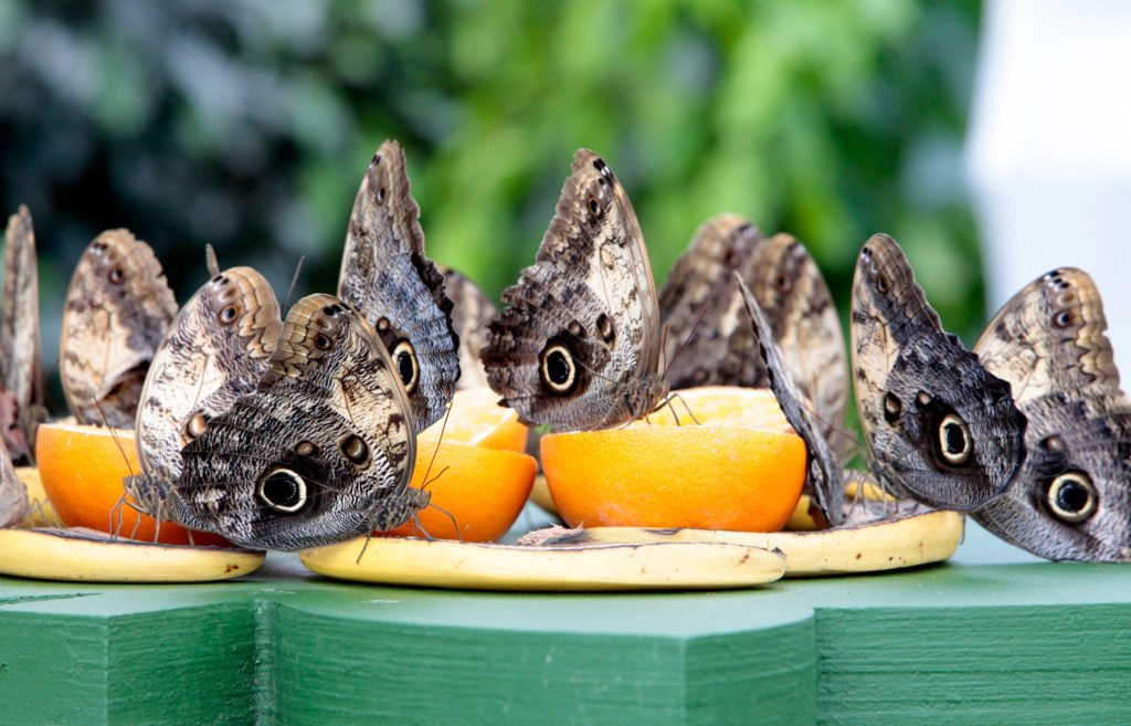 butterflies-feeding