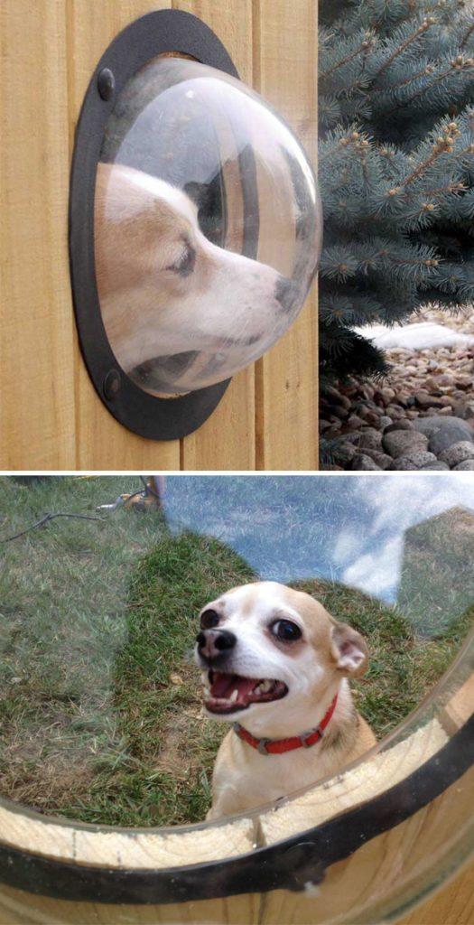 creative-dog-owners-2-57bbfecc9f368__605