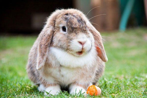 happy-rabbit
