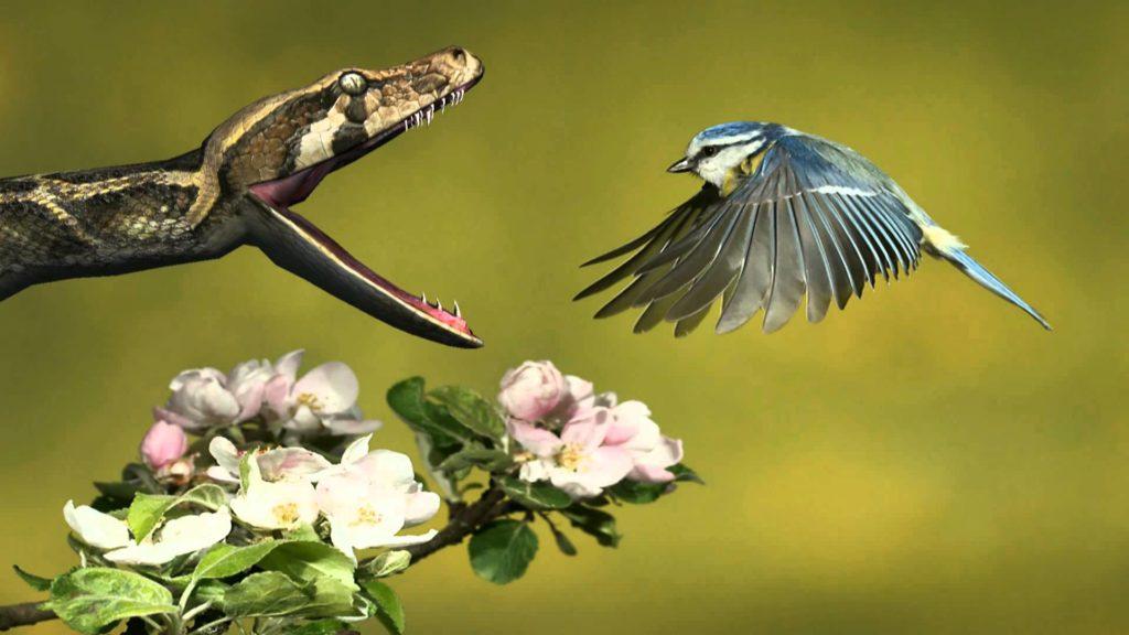 python-snake-and-bird