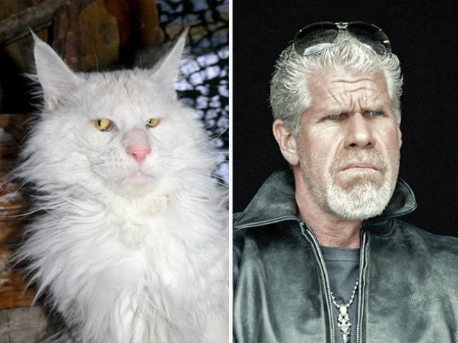 1-cats-that-look-just-like-movie-characters