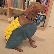 13-dog-halloween-costumes-that-are-just-adorable