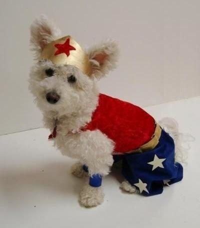 17-dog-halloween-costumes-that-are-just-adorable