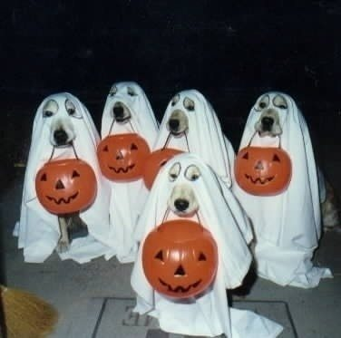 18-dog-halloween-costumes-that-are-just-adorable