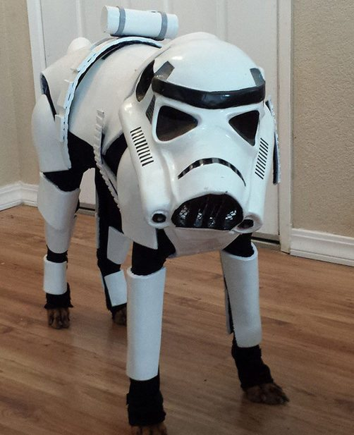21-dog-halloween-costumes-that-are-just-adorable