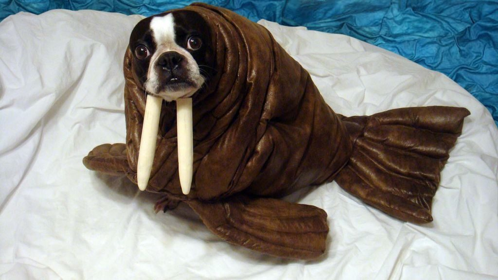 3-dog-halloween-costumes-that-are-just-adorable