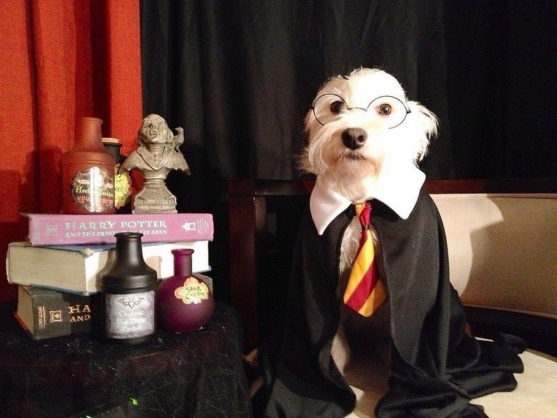 4-dog-halloween-costumes-that-are-just-adorable