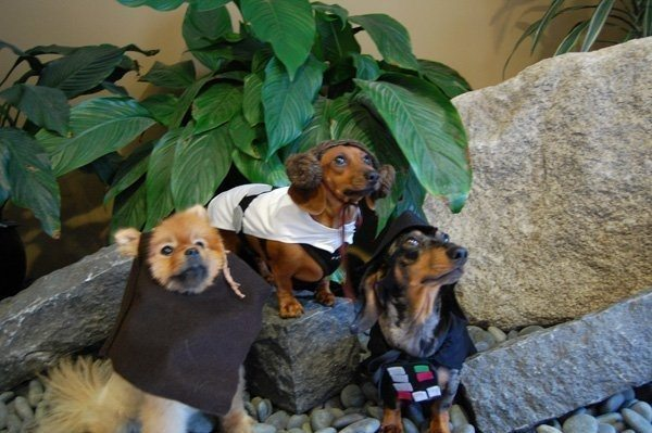 5-dog-halloween-costumes-that-are-just-adorable