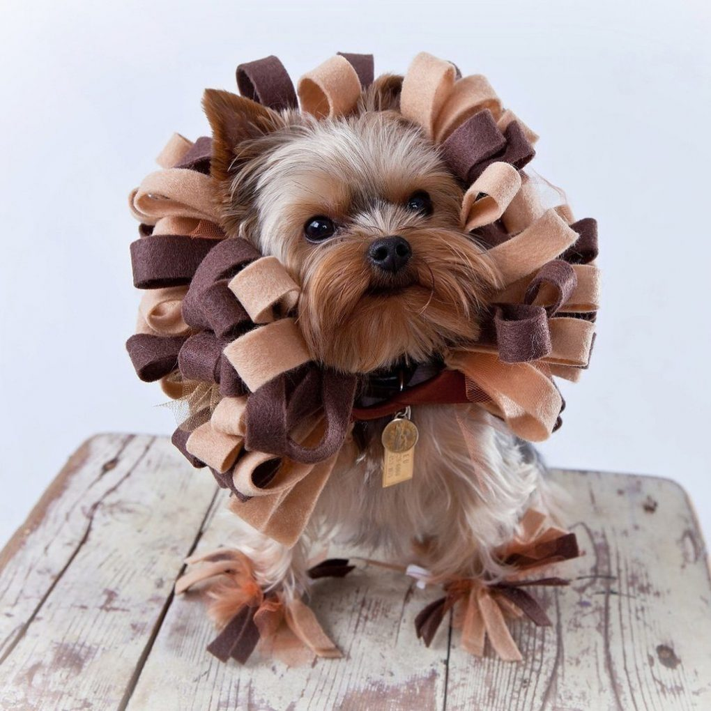 6-dog-halloween-costumes-that-are-just-adorable