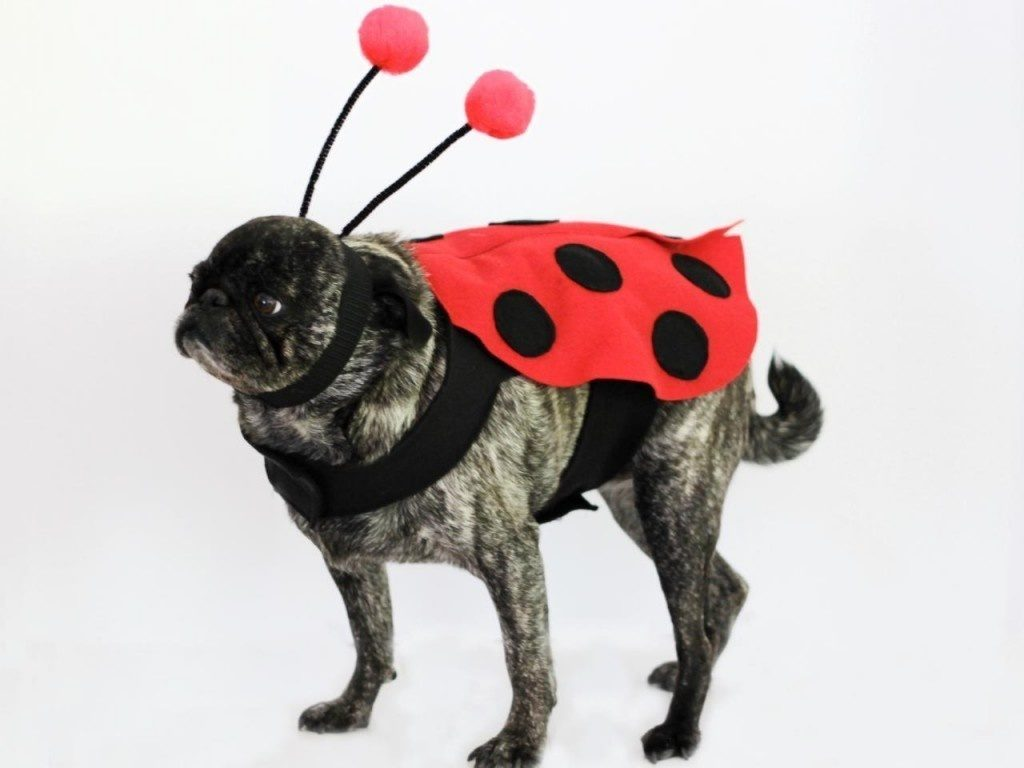 8-dog-halloween-costumes-that-are-just-adorable