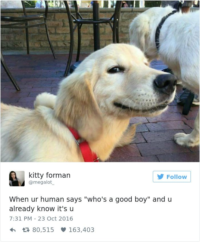 1-dog-tweets-that-are-simply-priceless