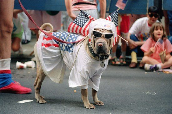 A patriotic dog waits for the Operation Welcome Home parade to start on Broadway during the 10 June 1991 celebration for returning Gulf War troops. AFP PHOTO MARIA B. BASTONE (Photo credit should read MARIA R. BASTONE/AFP/Getty Images)
