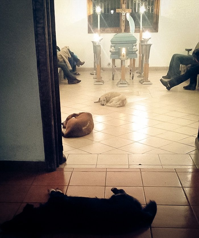 2-these-stray-dogs-showing-up-at-funeral-will-make-you-cry