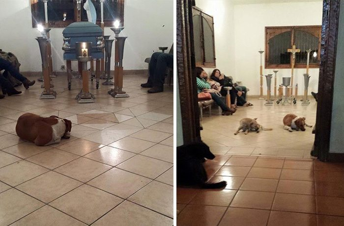 5-these-stray-dogs-showing-up-at-funeral-will-make-you-cry