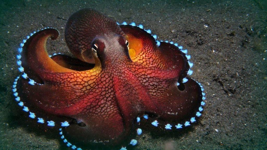 1-the-weirdest-ocean-animal-mysteries