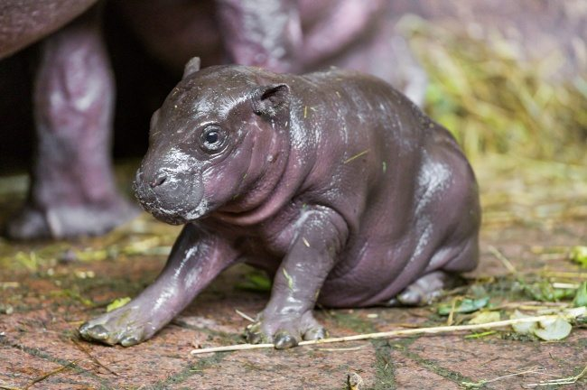 22-strange-animals-and-their-surprisingly-cute-babies