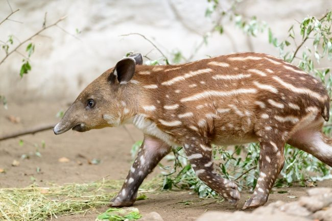 6-strange-animals-and-their-surprisingly-cute-babies