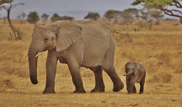 15-animal-myths-you-still-believe-are-true