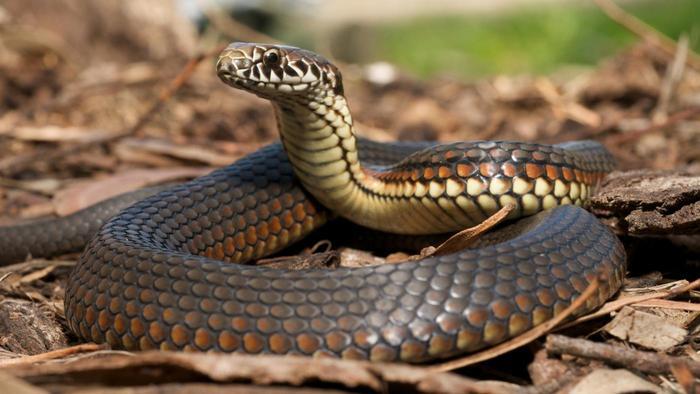 moth-balls-keep-snakes-away_d731c368d3991a0e