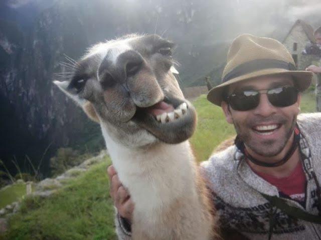 1-animal-and-human-selfies-hilarious-awesome