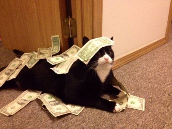 1-silly-animal-cat-get-money