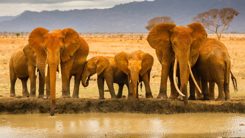african-elephant-family