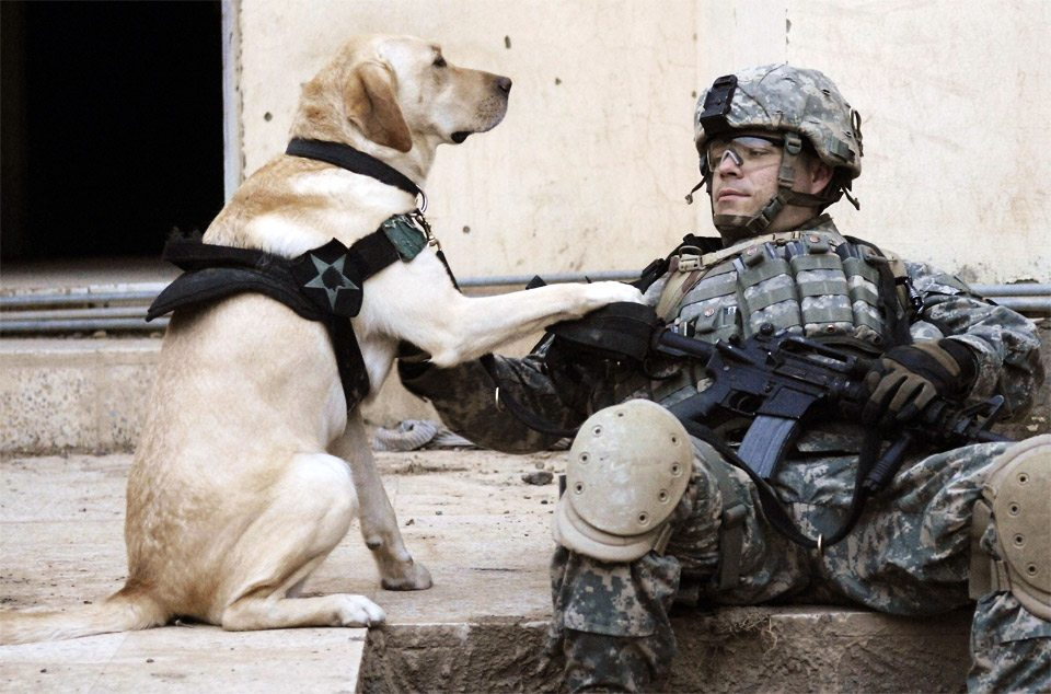 dog-owner-loyal-soldier