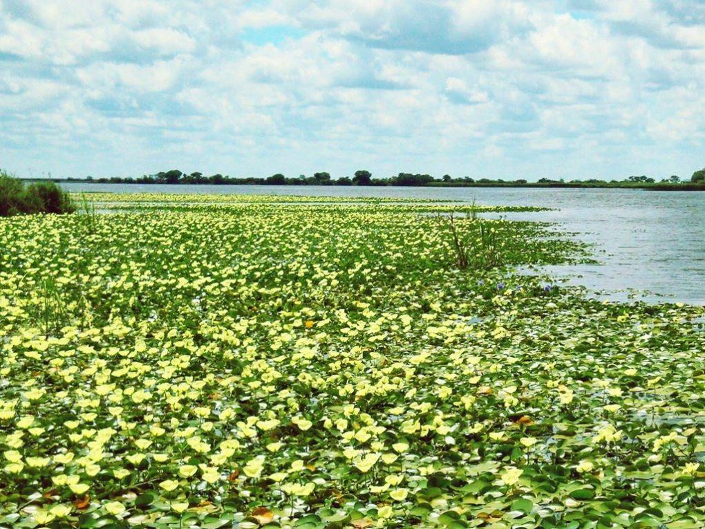 ibera-wetlands