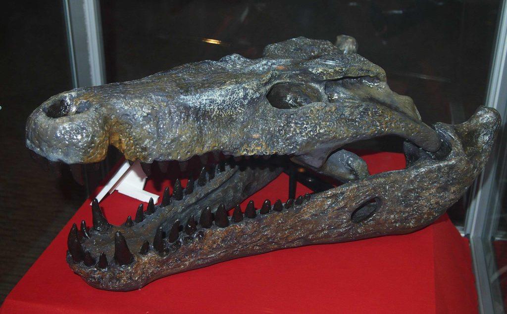 Quinkana, the giant crocodile
