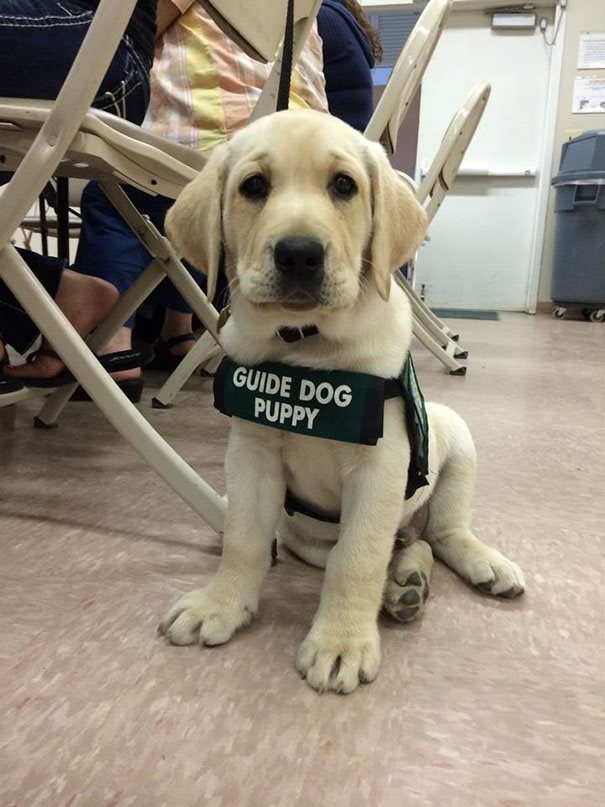 13-heartmelting-animals-getting-ready-to-work