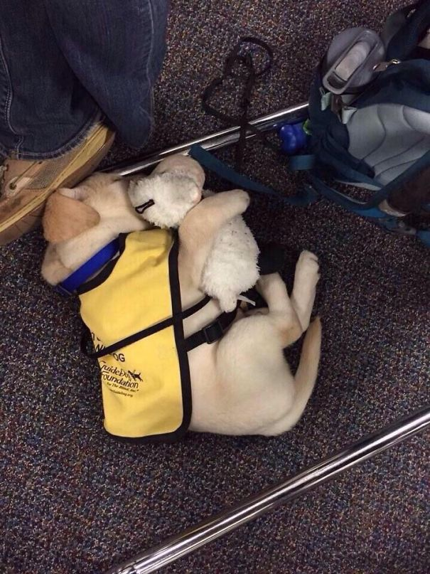 2-heartmelting-animals-getting-ready-to-work