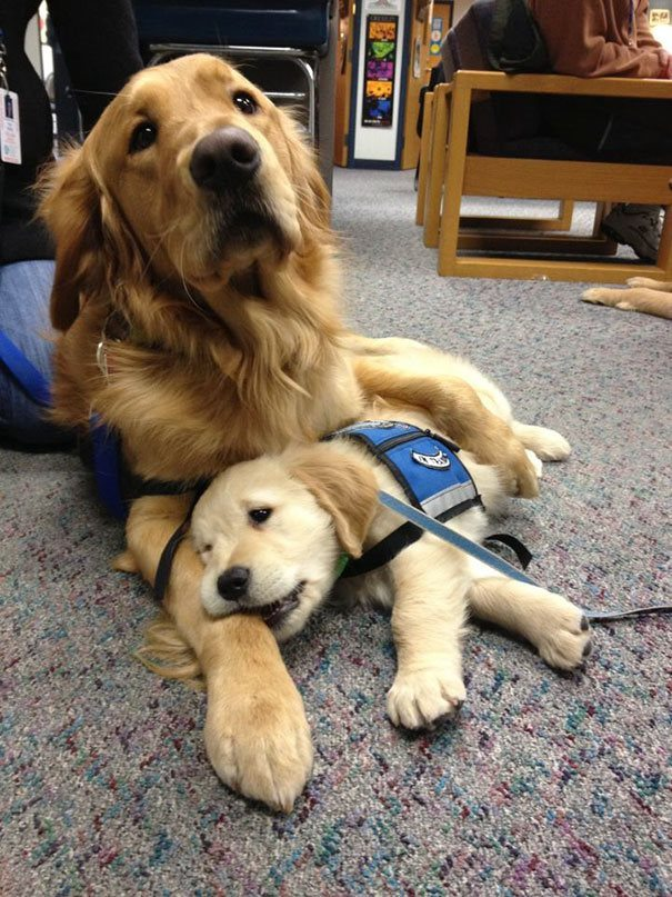 3-heartmelting-animals-getting-ready-to-work