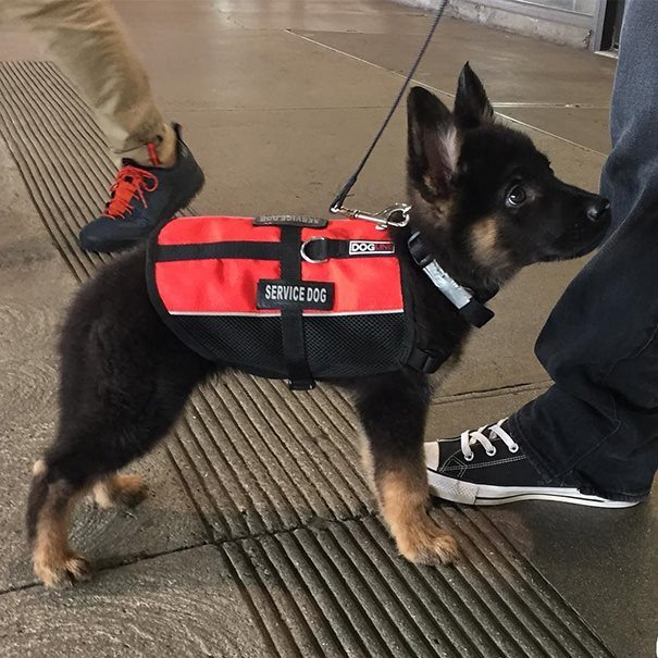 5-heartmelting-animals-getting-ready-to-work