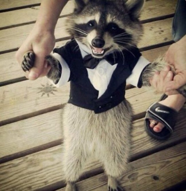 adorable-raccoons-1