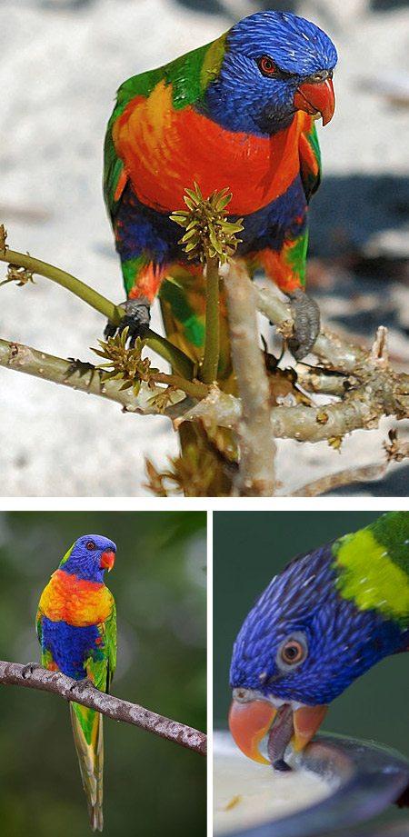 amazing-birds-1
