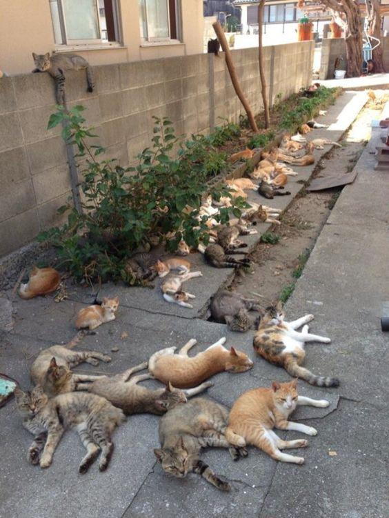 cat-lovers-1