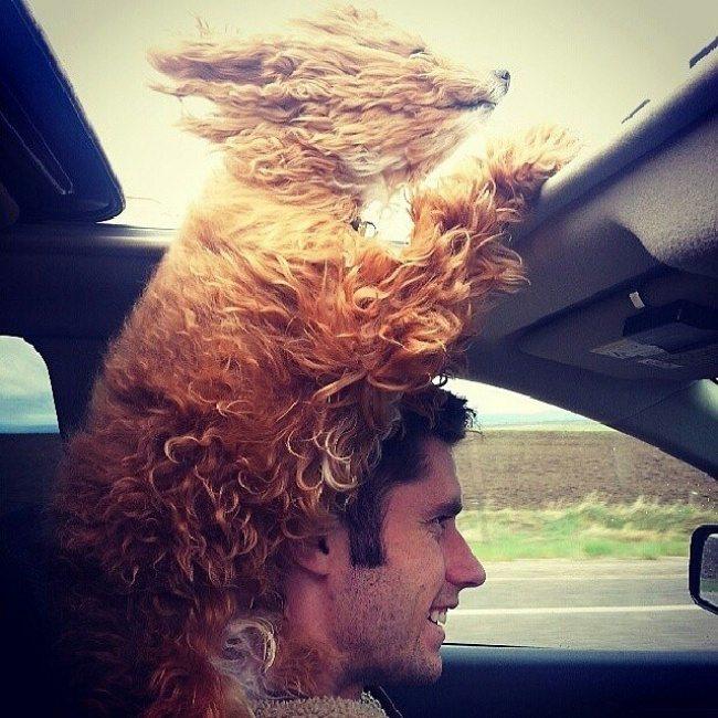 dog-friendship-1
