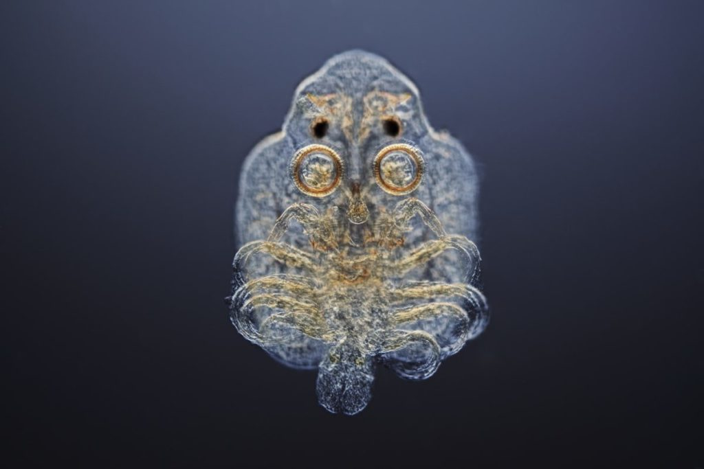 A fish louse uses suckers to attach to and walk along its host's body