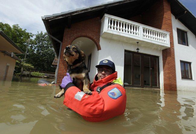 heroes-saving-animals-1