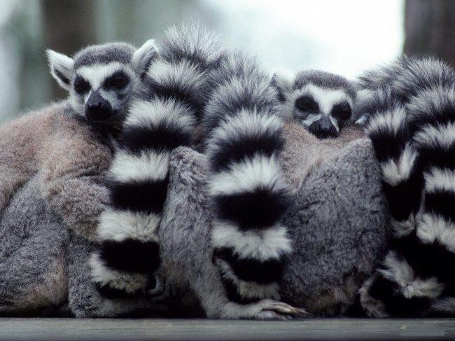 sleepy-animals-6
