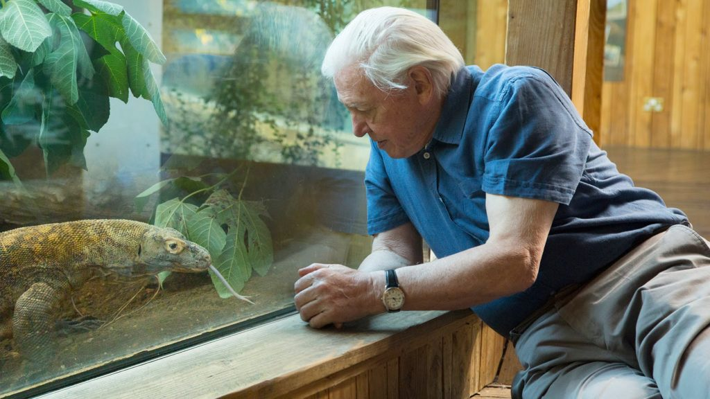 The British and Irish Association of Zoos and Aquariums