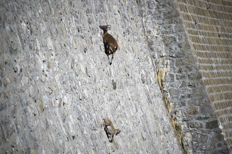 animals-with-amazing-abilities-8