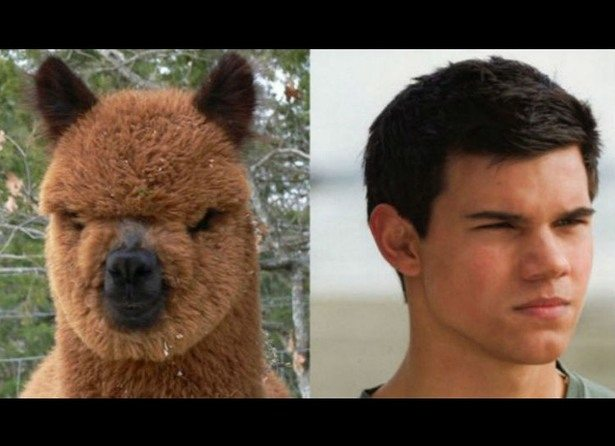 celebs-look-like-animals-1
