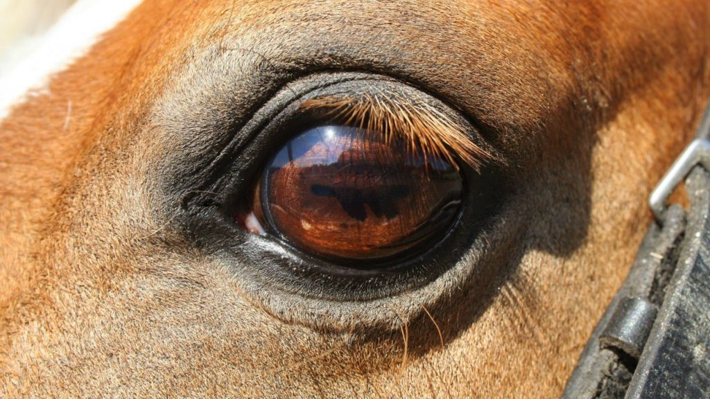facts-about-horses-1