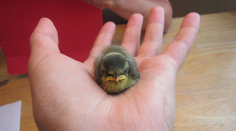 grumpiest-animals-of-all-time-1