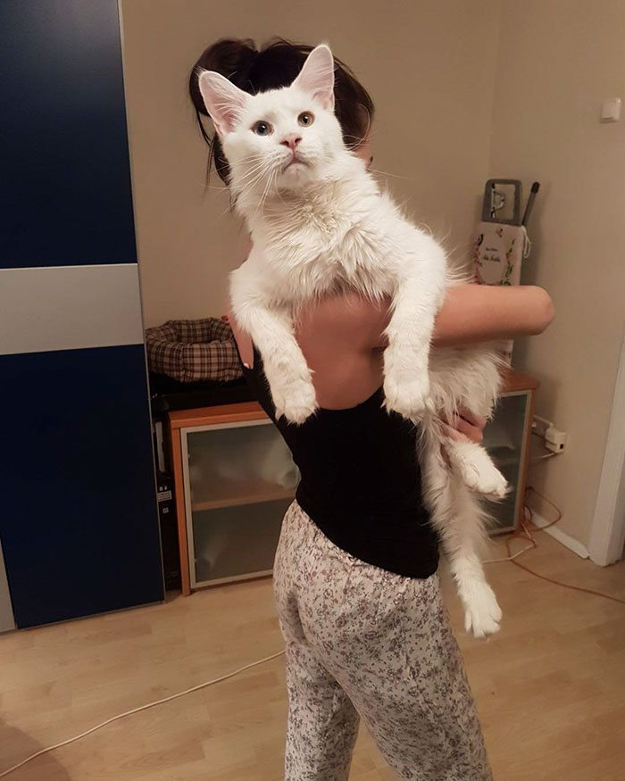 hug-cat-3